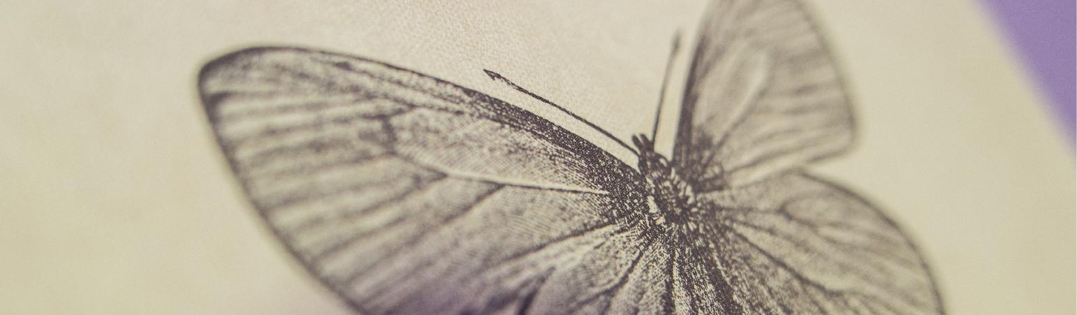 Detalle de un dibujo de una mariposa. En consulta Psicología con Paula, en Jaén.